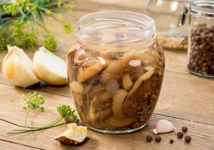 Грибы на зиму. Рецепты: маринованные, соленые грибы. Грибы без стерилизации